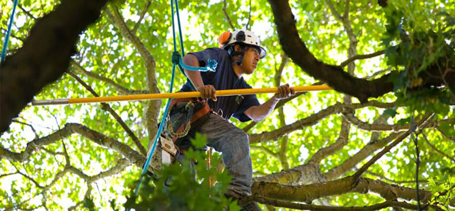tree trimming plano tx