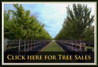 tree sales frisco